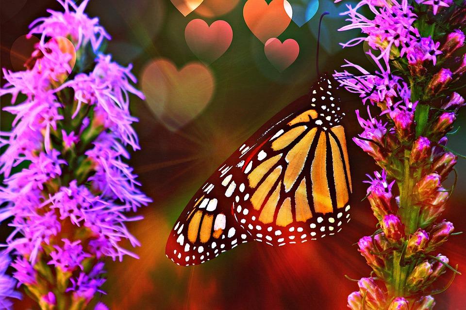 Clarity, Butterfly, Summer, Orange, Garden, Wings