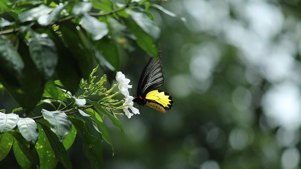 Butterfly, Flower, Drinking, Green, Yellow, White