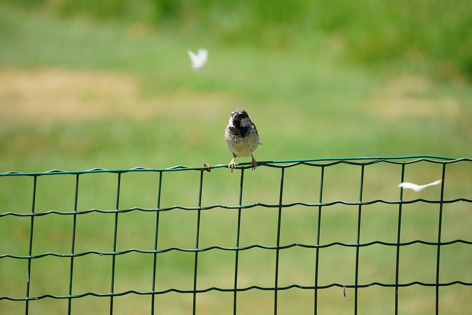 Bird, Fence, Butterfly, Green, Sparrow, Snapshot