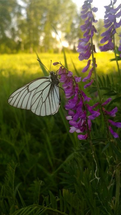 Butterfly, Flowers, Sun, Summer, Nature, Happy, Harmony
