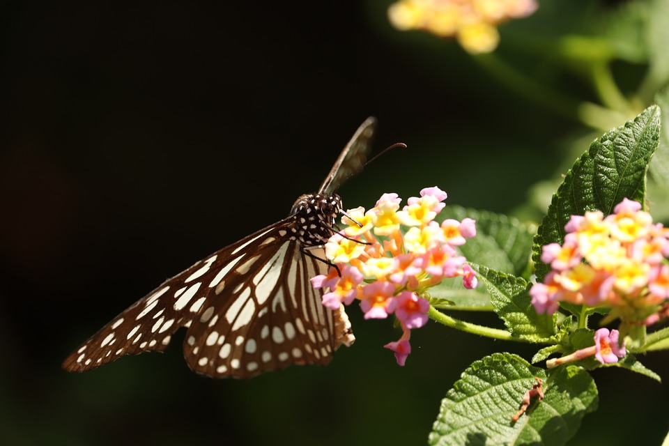 Butterfly, Nature, Ins, Insect, Flower, Butterflies