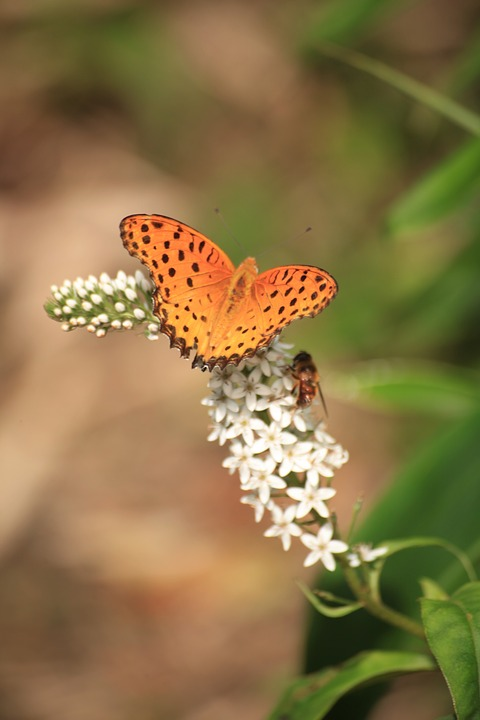 Bug, Butterfly, Insect, Bee, Flowers, Green