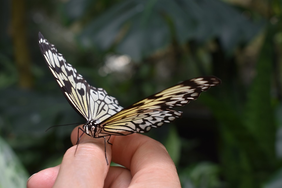 Butterfly, Insect, Hand, Holding