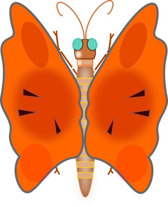 Butterfly, Lovely, Colors, Bug, Insect, Orange Love