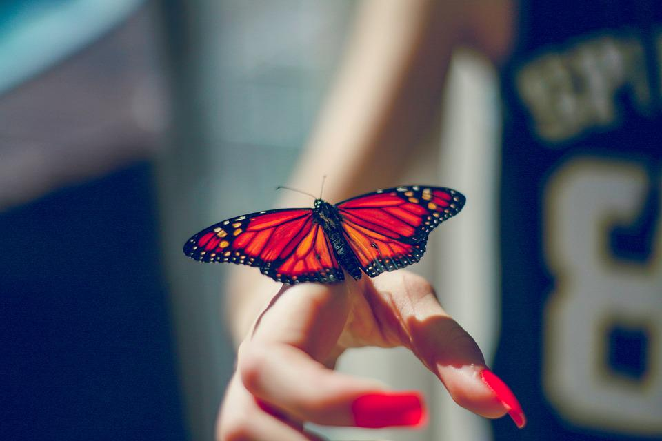 Butterfly, Nature, Insect