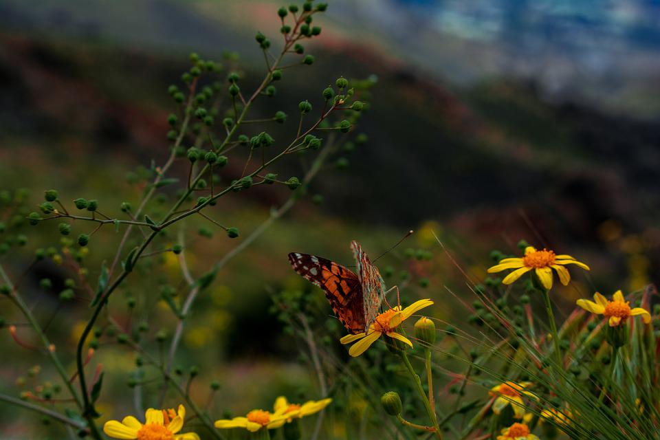 Macro, Butterfly, Nature, Insect, Animal