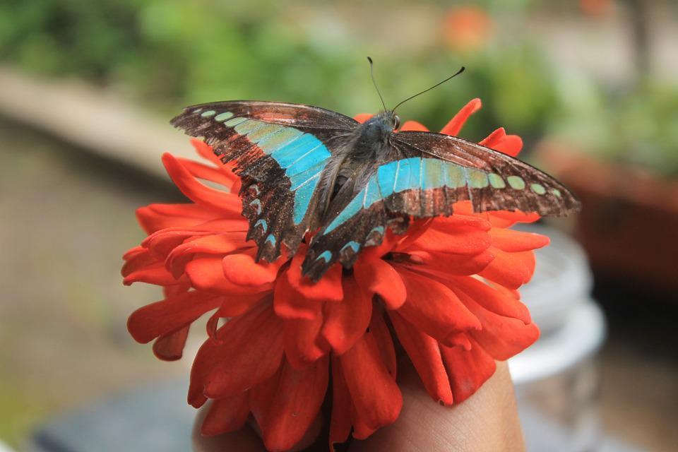 Butterfly, Blue, Animal, Insect, Fly, Nature, Macro