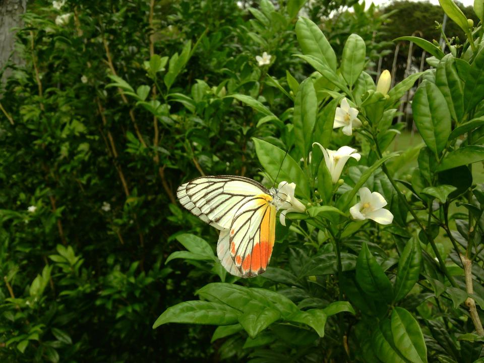 Butterfly, Nature, Photography, Flower, Insect