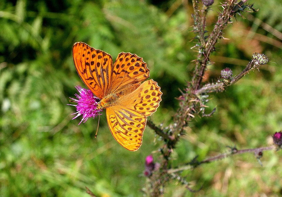 Nature, Butterfly, Insect, Wing
