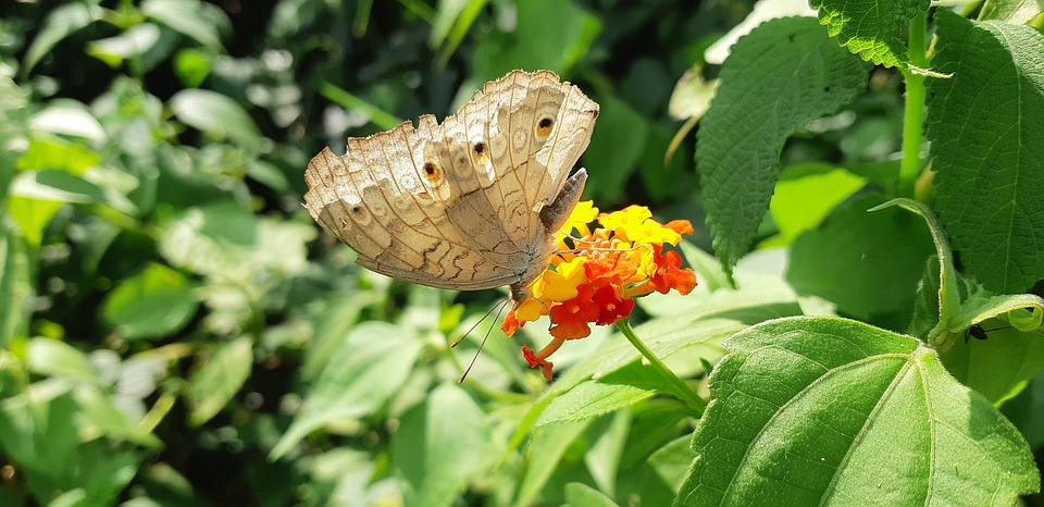 Butterfly, Insects, New, Usa, Australia, India