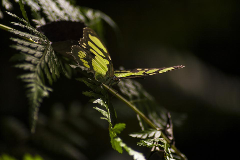 Butterfly, Jungle, Missions, Nature, Green