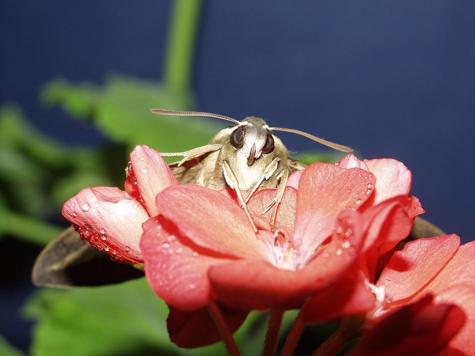 Macro, Butterfly, Flowers