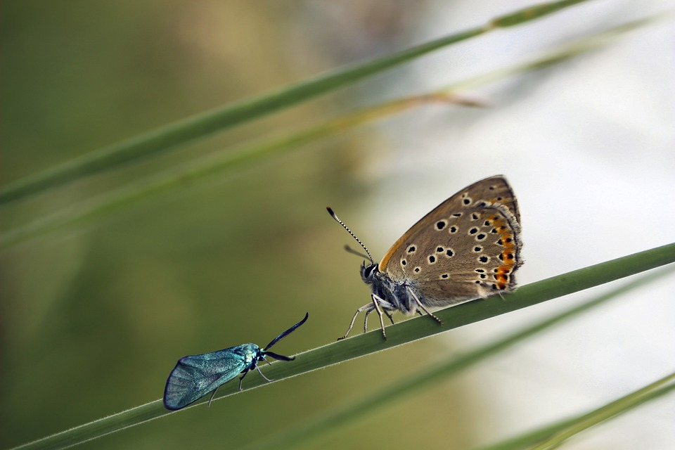 Butterfly, Insect, Butterflies, Nature, Spring, Macro
