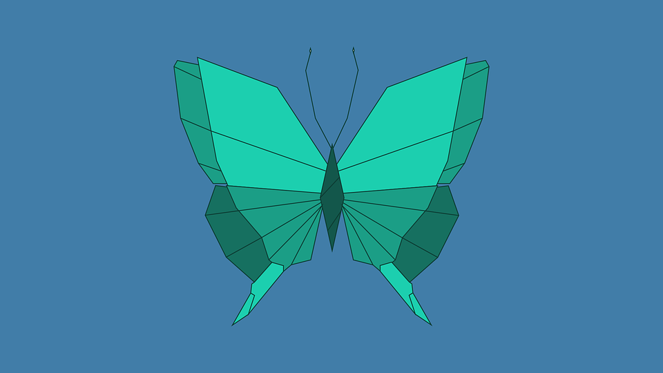 Butterfly, Mariposa, Nature