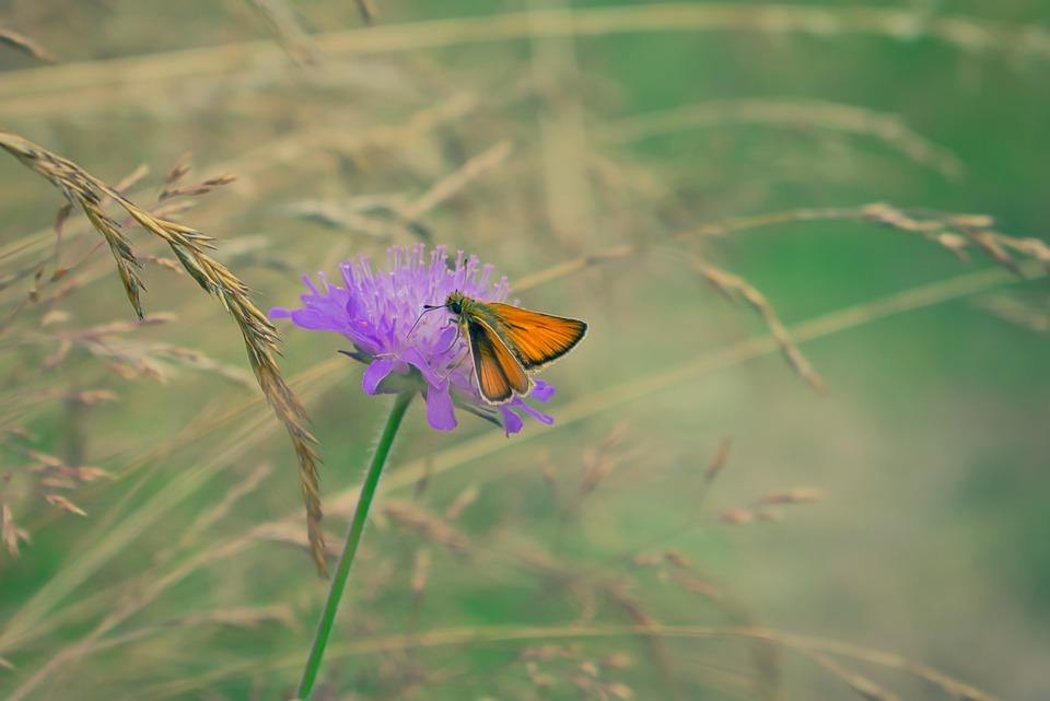 Butterfly, Insect, Flower, Orange, Purple, Meadow