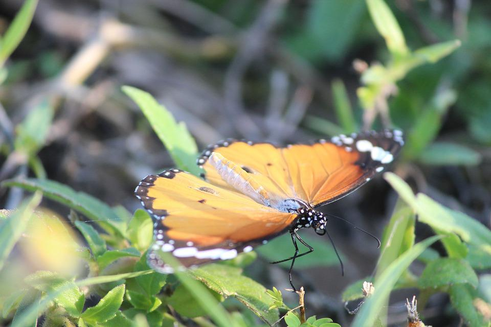 Butterfly, Grass, Orange, Beauty, Nature, Natural