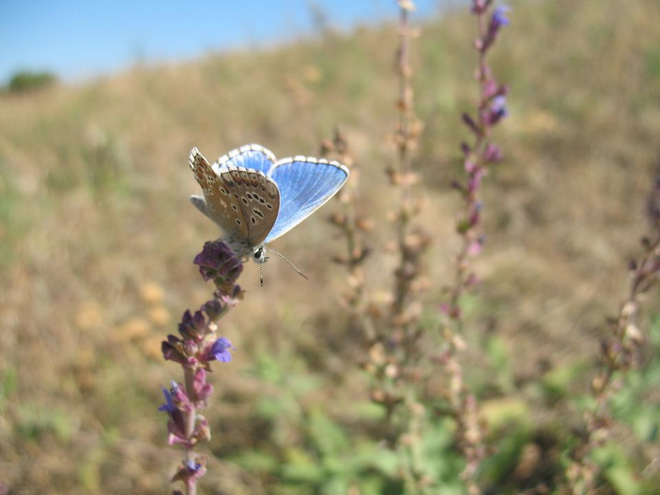 Butterfly, Nature, Summer, Insect, Flower