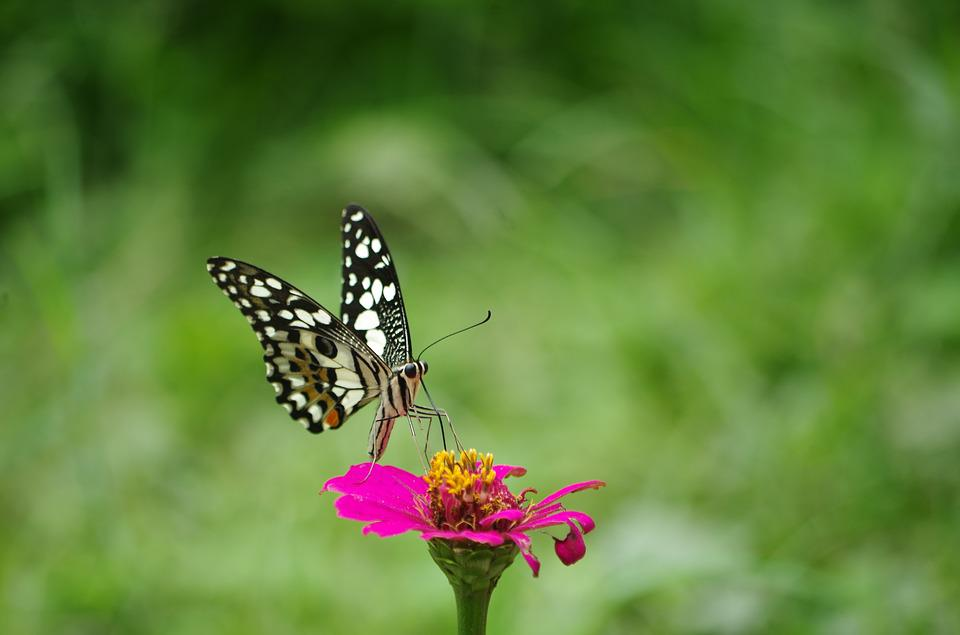 Butterfly, Flowers, Nature