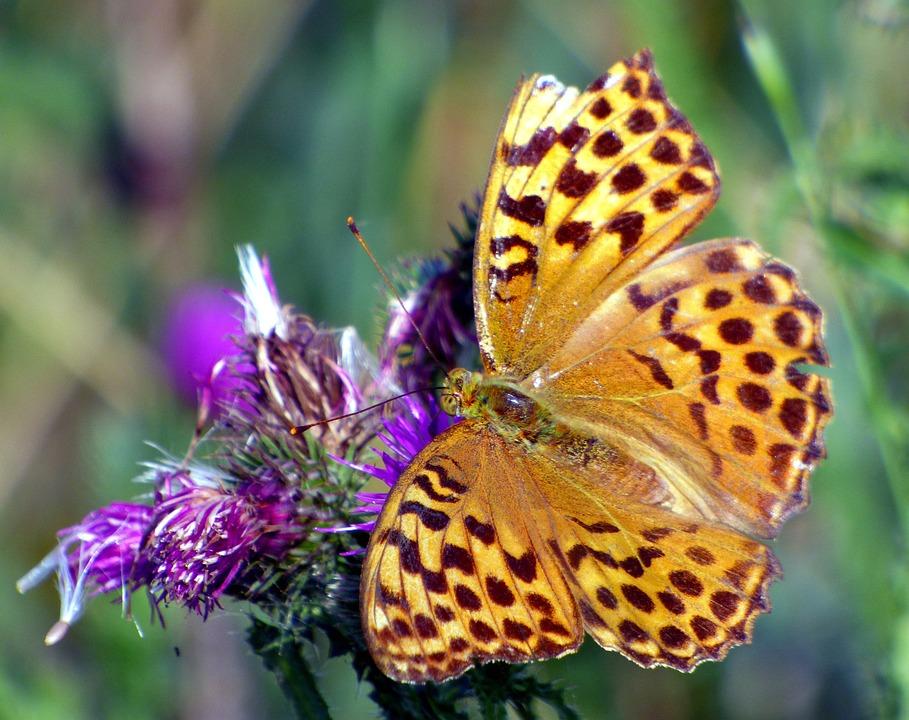 Butterfly, Flower, Nature, Insect, Summer, Garden