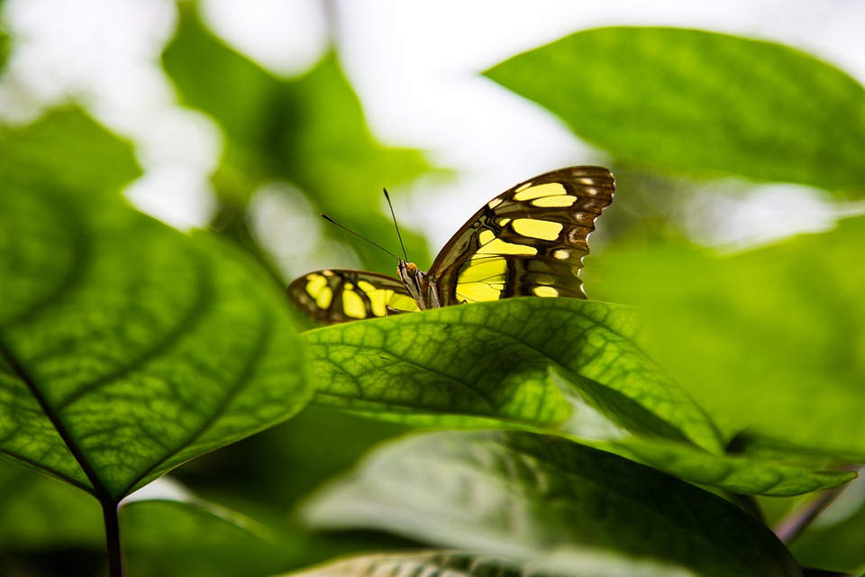 Butterfly, Green, Yellow, Nature, Close Up, Leaves