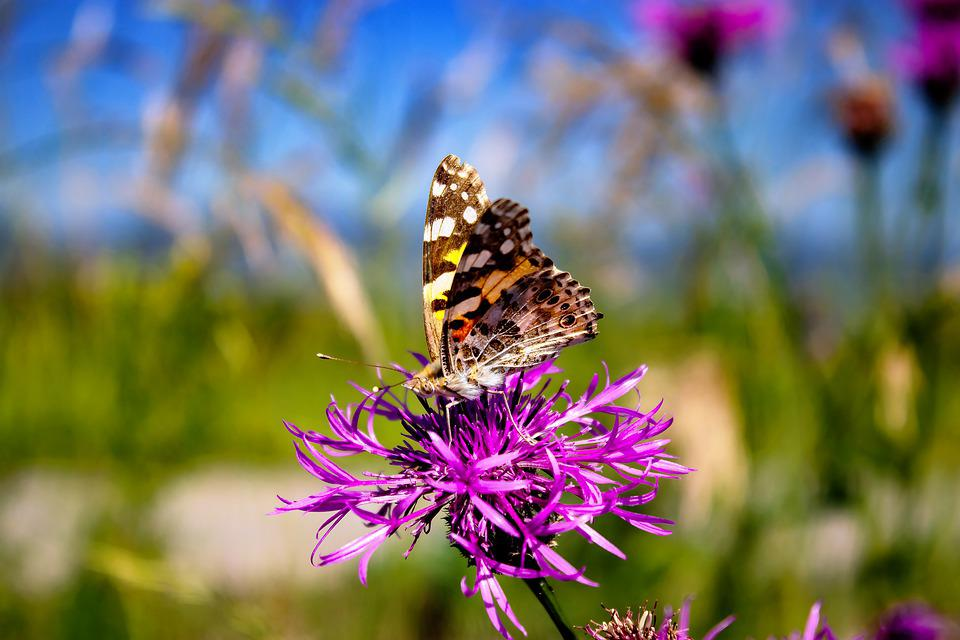Butterfly, Macro Photography, Landscape, Nature, Insect