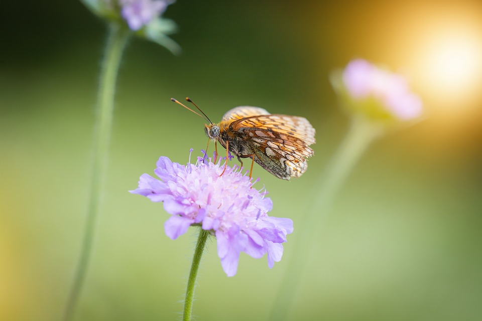 Butterfly, Nature, Insect, Flower, Pointed Flower