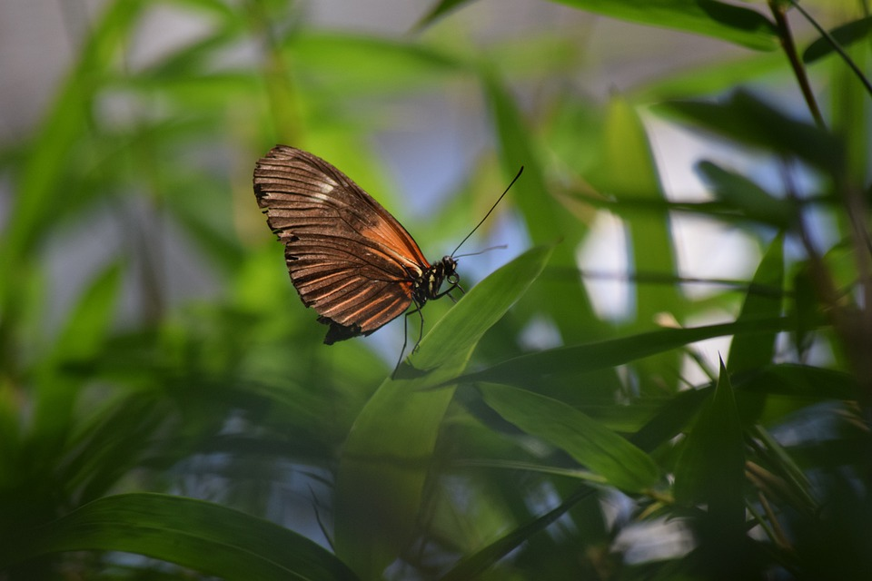 Butterfly, Nature, Orange