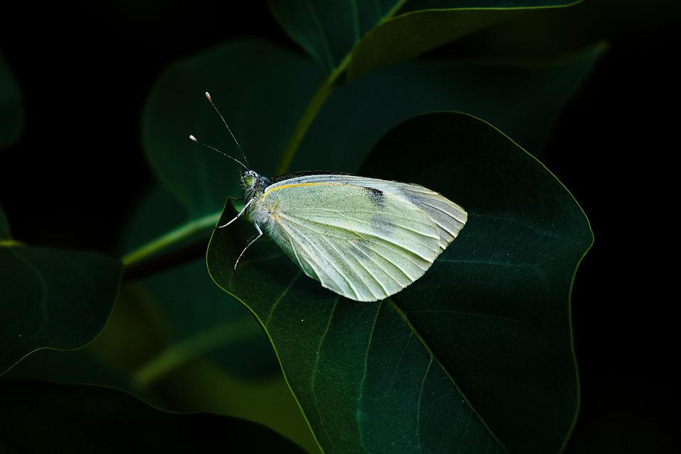 Butterfly, Time Of Year, Nature