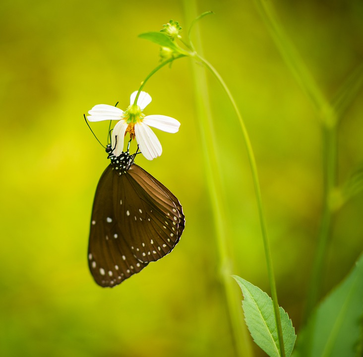 Butterfly, Nature, Outdoor, Insect, Animal, Wing