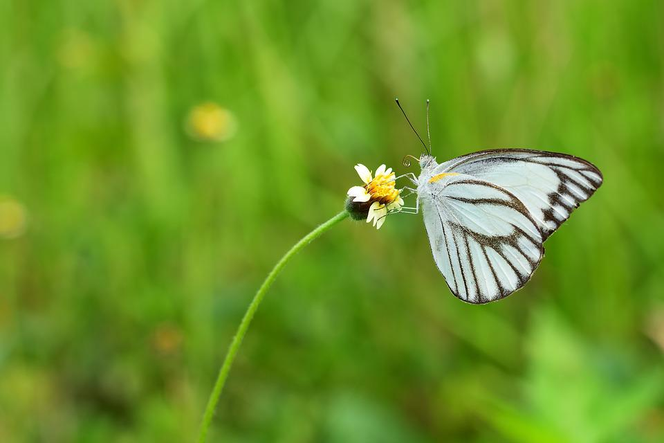 Butterfly, Nature, Insect, Summer, Outdoors
