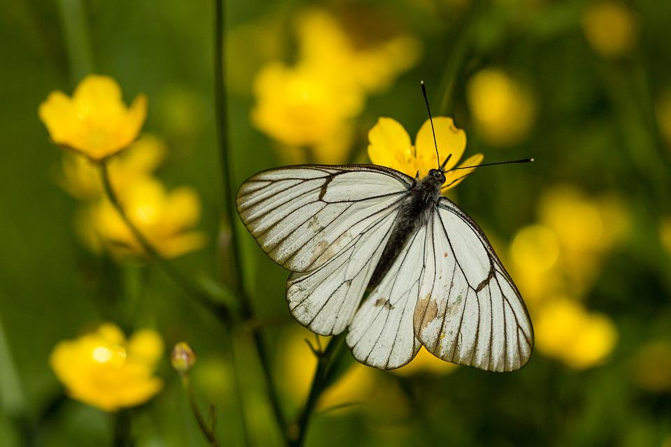 Nature, Butterfly, Insect, Summer, Outdoors, Flower