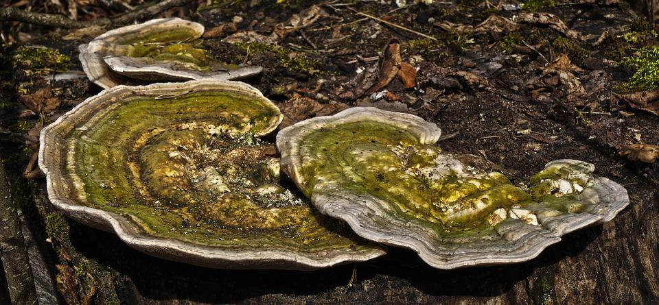 Tree Fungus, Butterfly Ovinus, Colorful Tramete