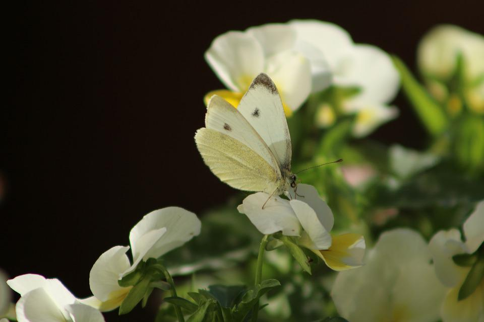 Flower, Wing, Butterfly, Animal, Nature, Insect, Plant