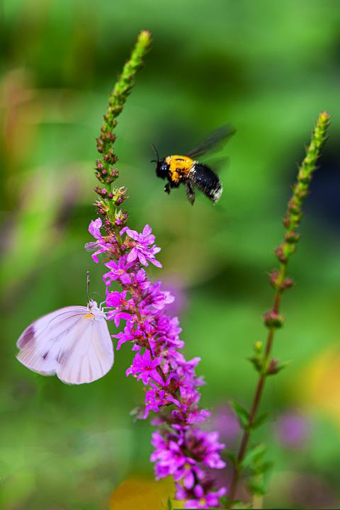 Pollination, Insects, Flower, Butterfly, Bee, Plant