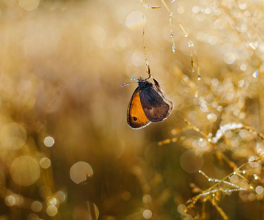 Butterfly, Insects, Nature, Rosa, Drops, The Sunlight