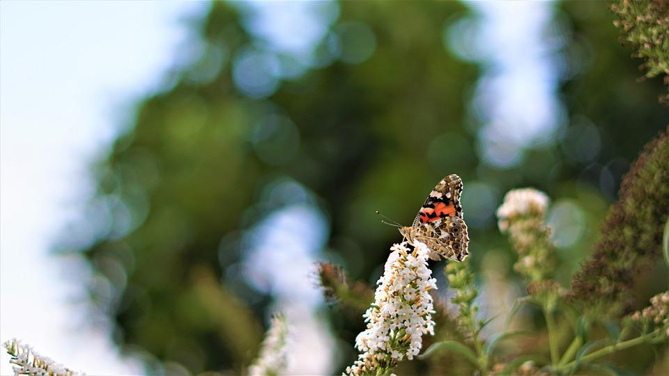 Background, Pattern, Butterfly, Insect, Small, Color