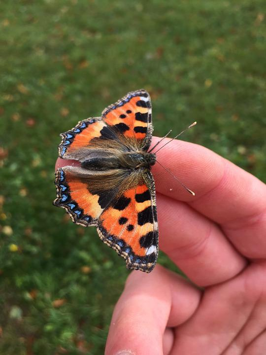 Butterfly, Hand, Moth, Insect, Spring