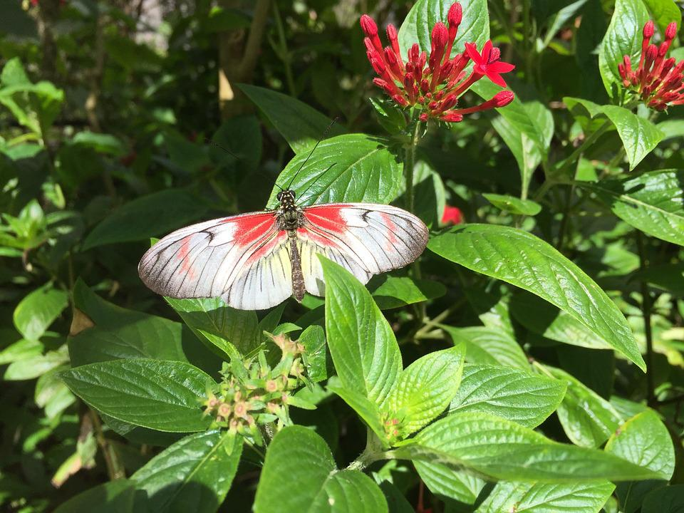 Butterfly, White, Red, Insect, Outdoors, Nature, Spring