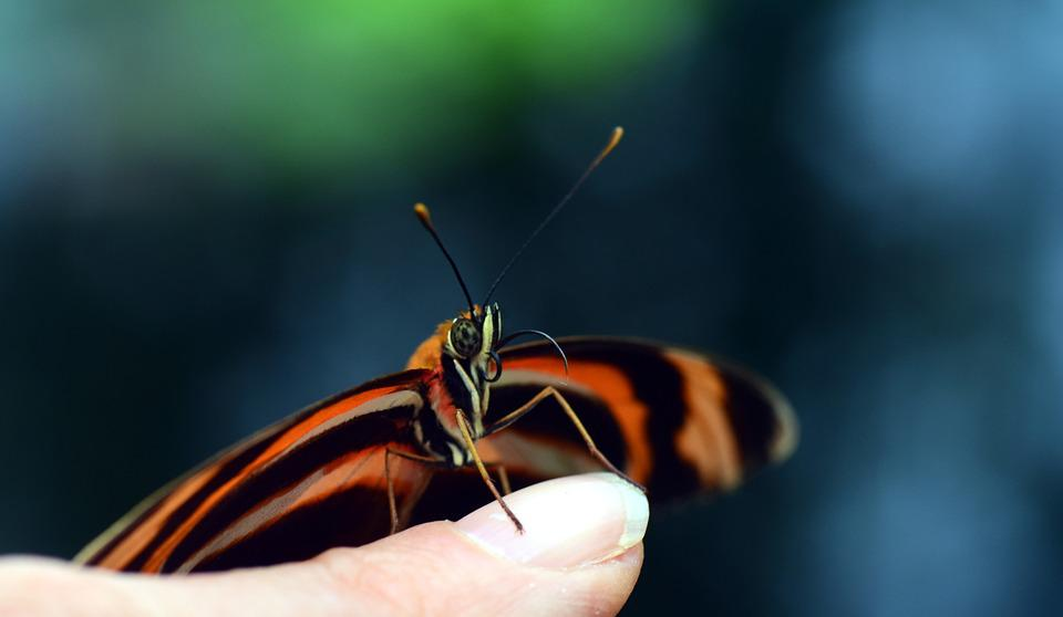 Butterfly, Small, Tender, Wing, Stripes, Orange, Black
