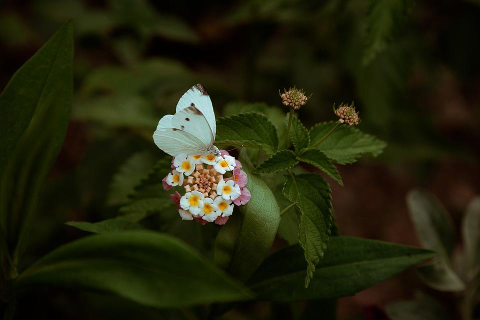 Butterfly, Flower, Nature, Travel, Spring, Background