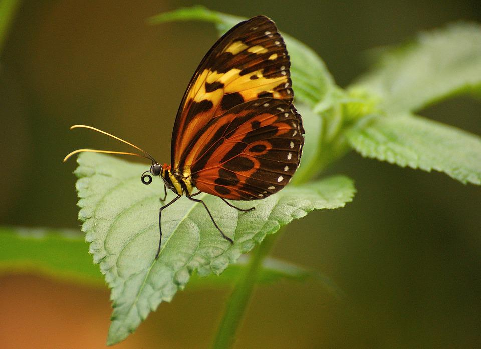 Butterfly, Exotic, Tropical, Butterfly House, Insect