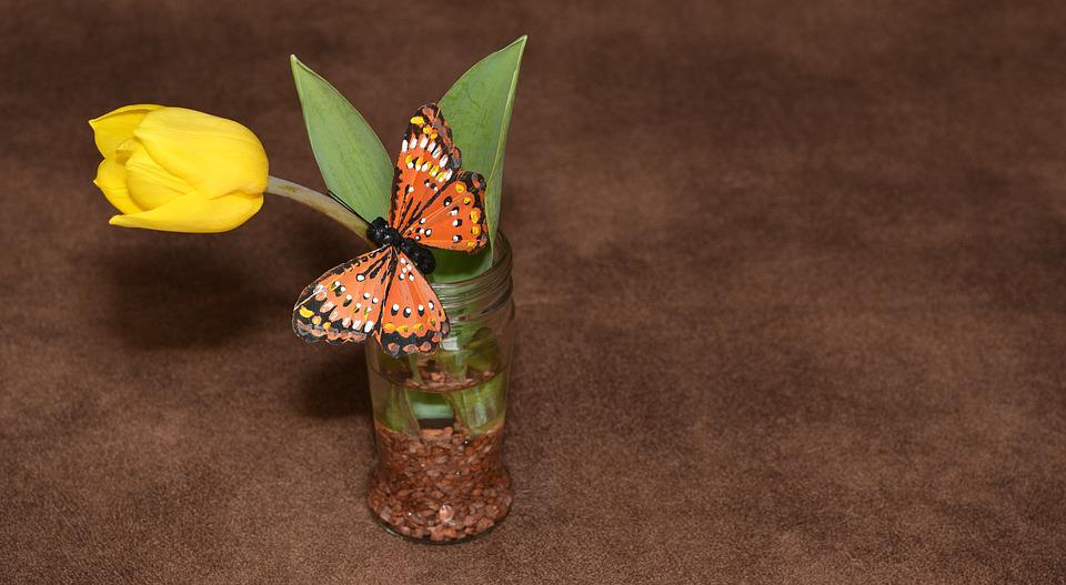 Tulip, Yellow, Flower, Plant, Schnittblume, Butterfly