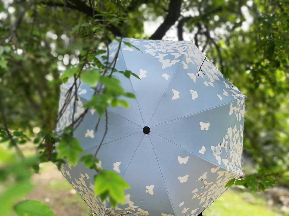 Umbrellas, Blu, Butterflies, Blue, Butterfly, Forest