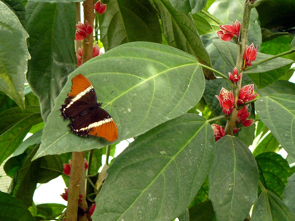 Butterfly, Blossom, Bloom, Nature, Green, Red, Visit