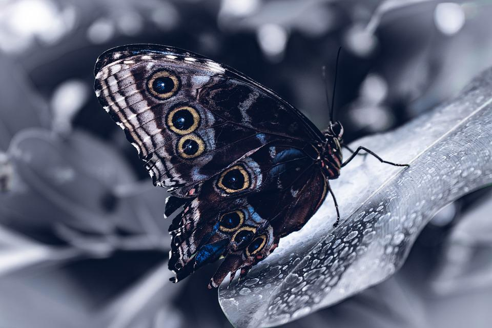 Butterfly, Ice, Black, White, Blurry Background