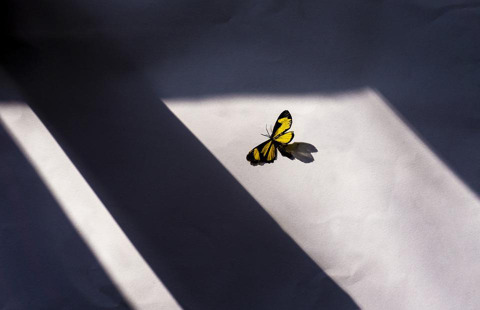 Butterfly, Window, Art, Paper, Colorful, Nature