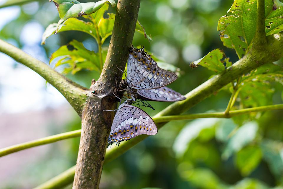 Tree, Butterfly, Nature, Insects, Wings