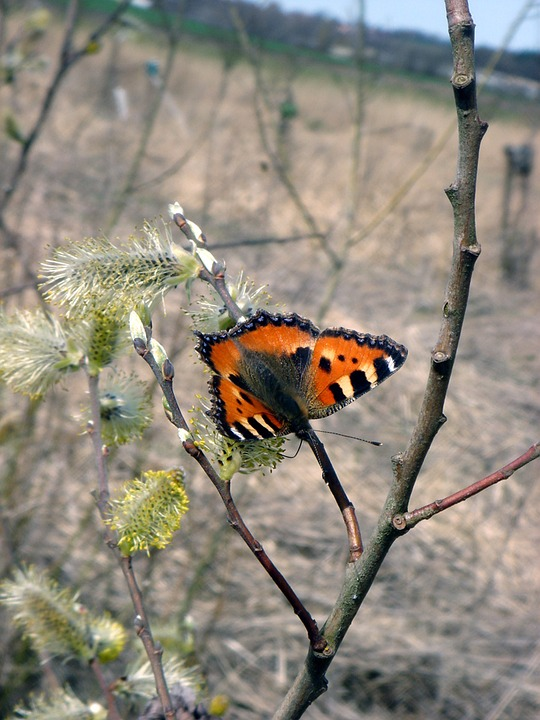 Butterfly, Spring, Nature, Swallowtail, Branch, Wings