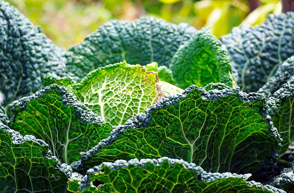 Cabbage, Vegetables, Leafy Greens, Macro