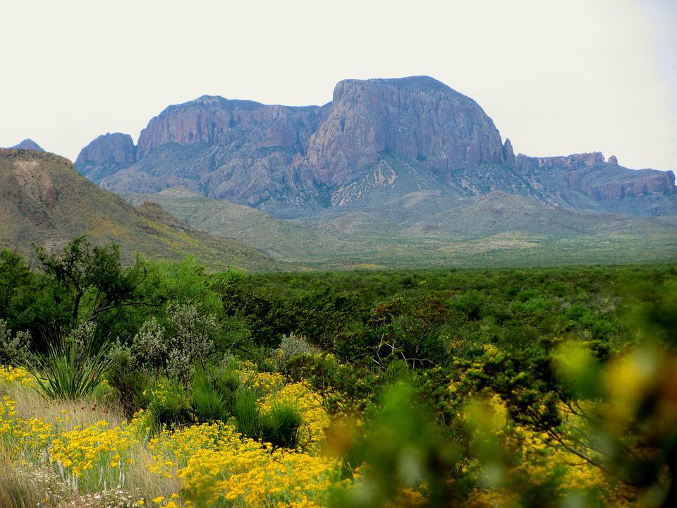 Big Bend, Desert, Cactus, Mountains, Scenic, Landscape